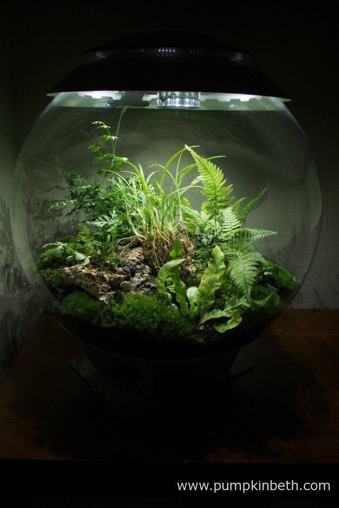 My BiOrbAIR terrarium, as pictured on the 18th October 2015.