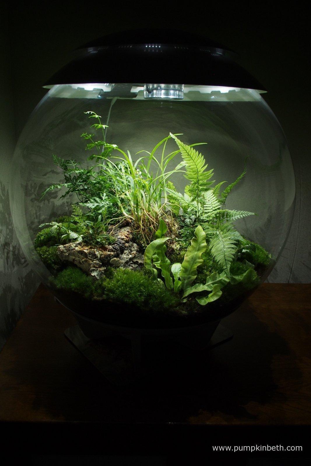 general terrarium maintenance and plant care for the biorbair terrarium pumpkin beth. Black Bedroom Furniture Sets. Home Design Ideas