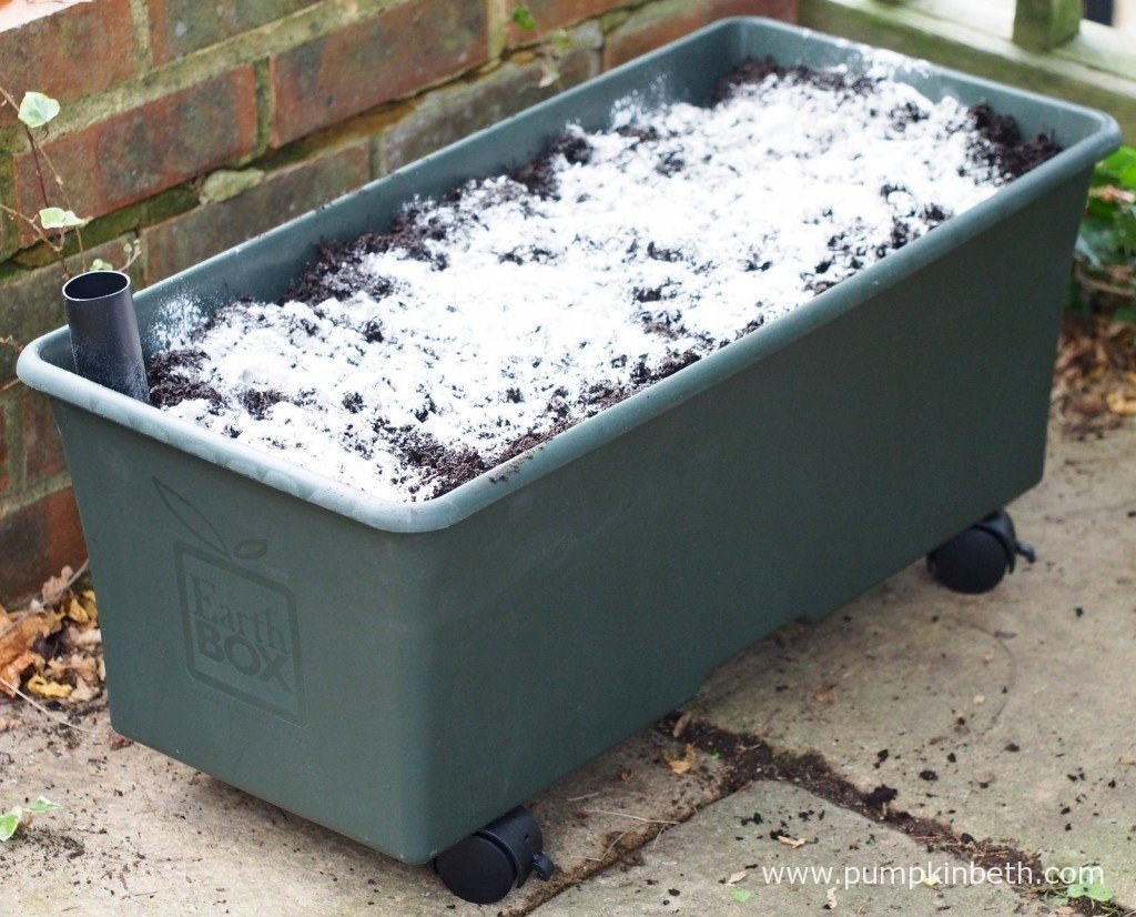 Here you can see the EarthBox, it's been filled with peat-free compost and then covered in Dolomite.