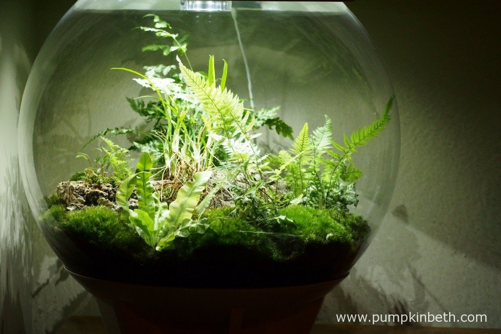 Here's my BiOrbAir terrarium, as pictured on 17th November 2015.