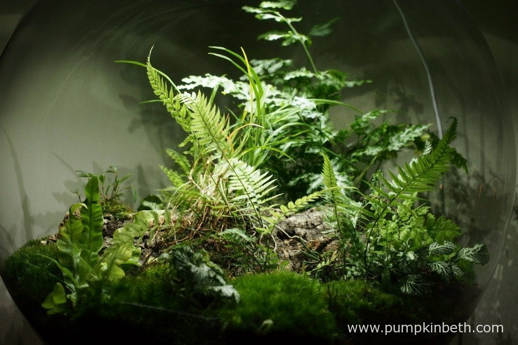 Here's a closer look at the planting inside my BiOrbAir terrarium. This photograph was taken on 17th November 2015.