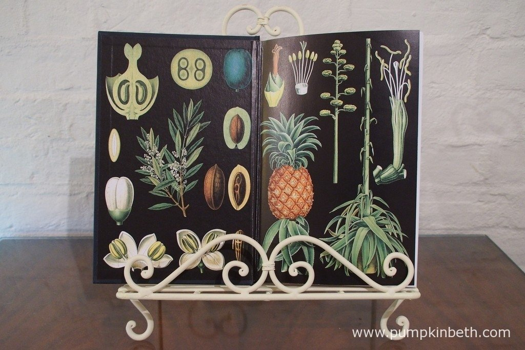 The beautifully illustrated inside cover of 'The Cabaret of Plants Botany and The Imagination' by Richard Mabey, details such as this and the splendidly designed outer dust cover add to the beauty of this book.