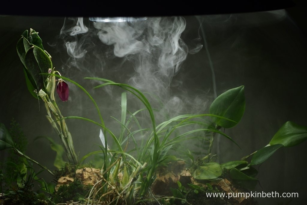 My BiOrbAir terrarium, as pictured on the 15th January 2016. Here you can you see Restrepia sanguinea, Ornithophora radicans, Restrepia purpurea 'Rayas Vino Tinto', Barbosella australis and Lepanthopsis astrophora 'Stalky' and the BiOrbAir's ultra sonic misting unit in operation.
