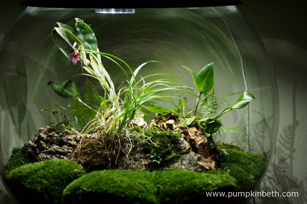My BiOrbAir terrarium as pictured on the 17th January 2016. I am looking forward to trialling new orchids inside this specialised, automated terrarium.