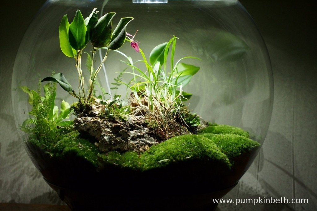 My BiOrbAir terrarium, as pictured on the 17th January 2017. As you can see in this photograph, I have left a larger area of moss at the front of my planting scheme, this not only looks attractive, but allows for easier watering and manoeuvring around the inside of the terrarium.
