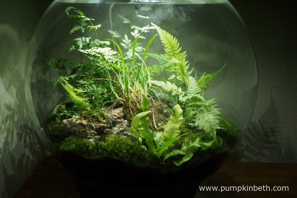 My BiOrbAir terrarium as pictured on the 1st January 2016. In this photo you can just see the ultra-sonic misting unit in operation.