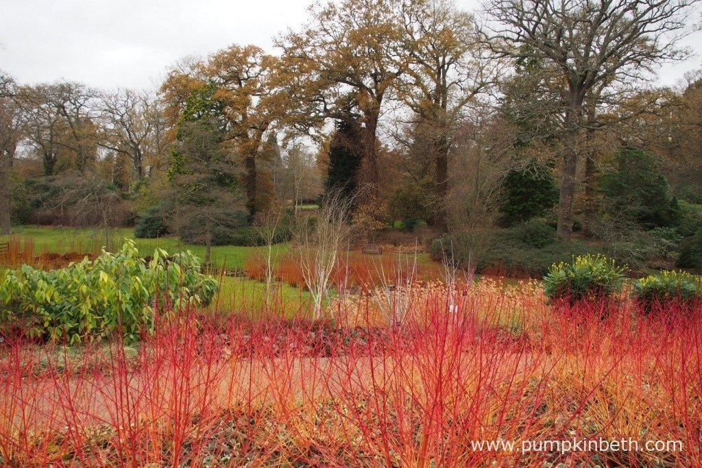 The Savill Garden, near Englefield Green, Windsor, as pictured in December. This lovely garden will be opening its doors for free to visitors throughout January and February 2016.
