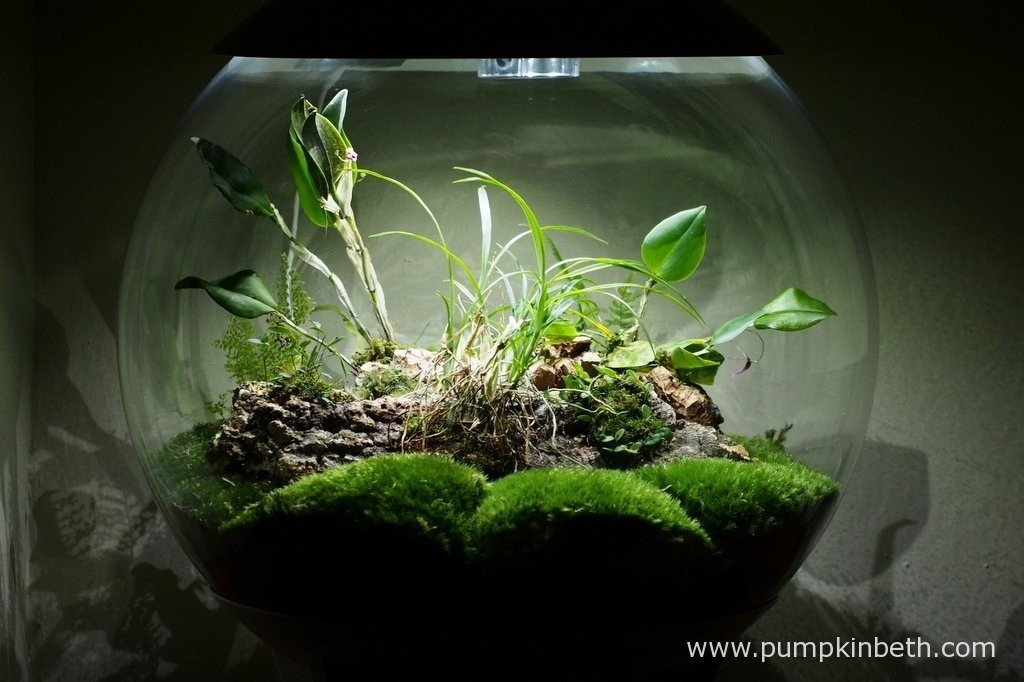My BiOrbAir Terrarium as pictured on the 10th February 2016.
