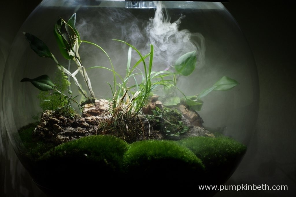 My BiOrbAir terrarium, as pictured on the 18th March 2016, with the ultra sonic misting unit in operation.