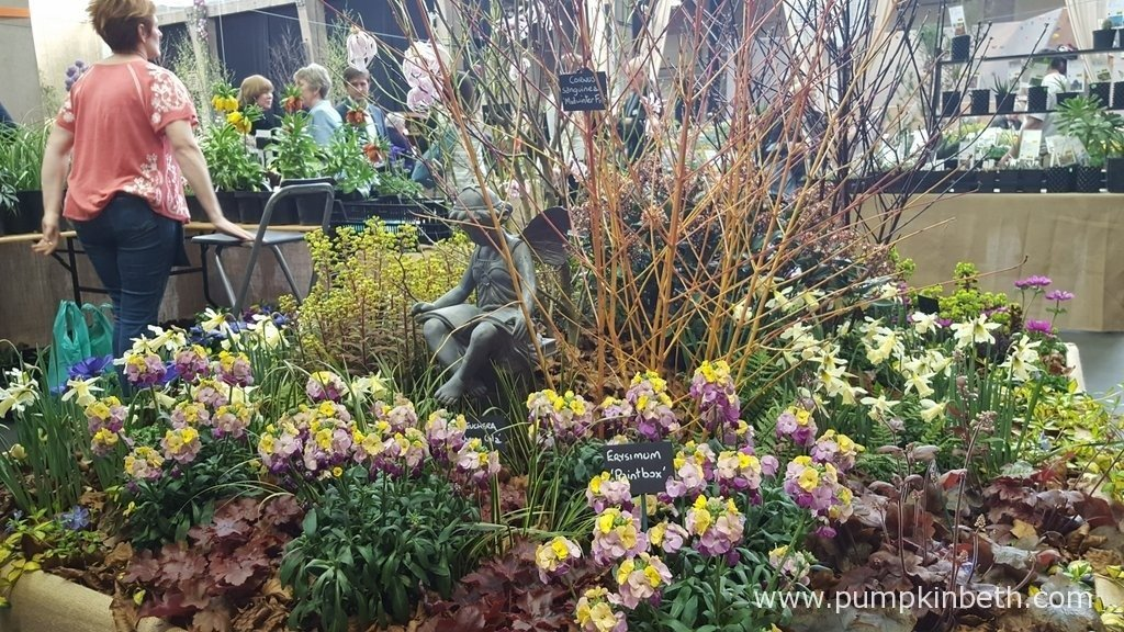 Here's some of Daisyroots Nursery's beautiful spring flowering plants, as pictured at The RHS London Spring Plant Extravaganza 2016.