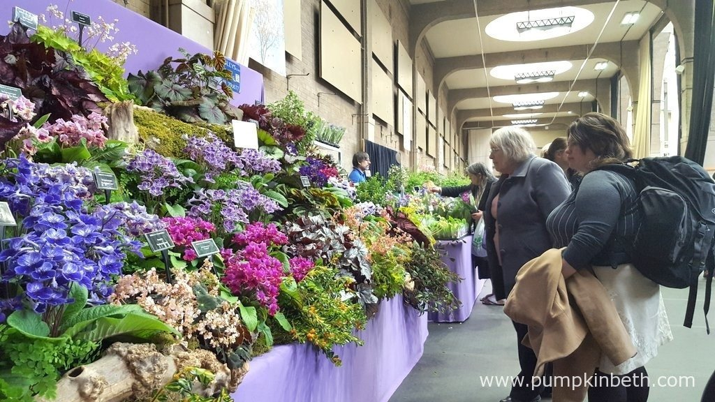 A Gold Medal winning exhibit from Dibleys Nurseries at The RHS London Spring Plant Extravaganza 2016.
