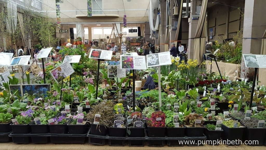 The RHS Spring Plant Extravaganza is a great place to buy lots of beautiful spring flowering plants for your garden.