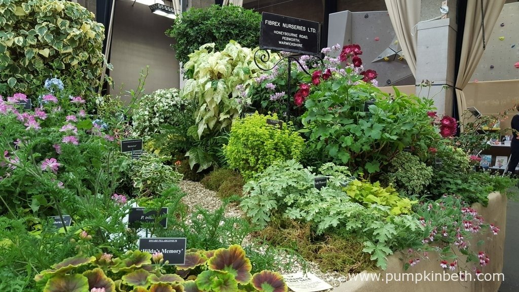 Fibrex Nurseries are specialist growers of pelargoniums, hederas, hardy ferns and Hellebores, here's their exhibit at The RHS London Spring Plant Extravaganza 2016.