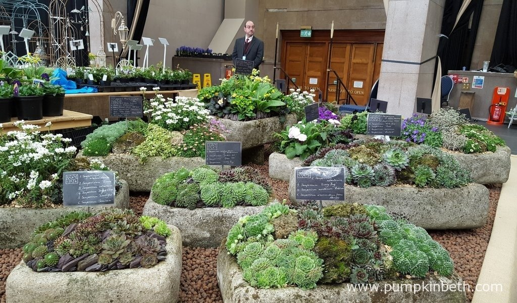 Rotherview Nursery were awarded a Silver-Gilt Medal by the RHS Judges for their lovely display of alpine plants and small perennial plants in hypertufa troughs at The RHS London Spring Plant Extravaganza 2016.