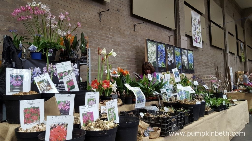 A wide variety of spring flowering plants are available to purchase in flower at The RHS London Spring Plant Extravaganza, you can also buy bulbs to plant now for flowers this autumn, such as Nerines and Amarines.