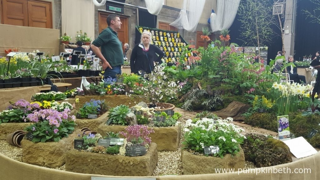 Harperley Hall Farm Nurseries were awarded a Gold Medal by the RHS Judges for their wonderful display of spring flowering plants at The RHS London Spring Plant Extravaganza.