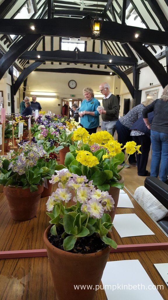 The National Auricula and Primula Society Southern Section 132nd Auricula Show was held on Saturday 20th April 2016 at Great Bookham.
