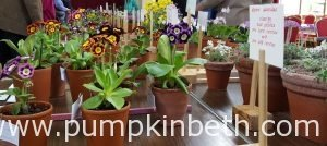 The National Auricula and Primula Society Southern Section's 132nd Auricula Show