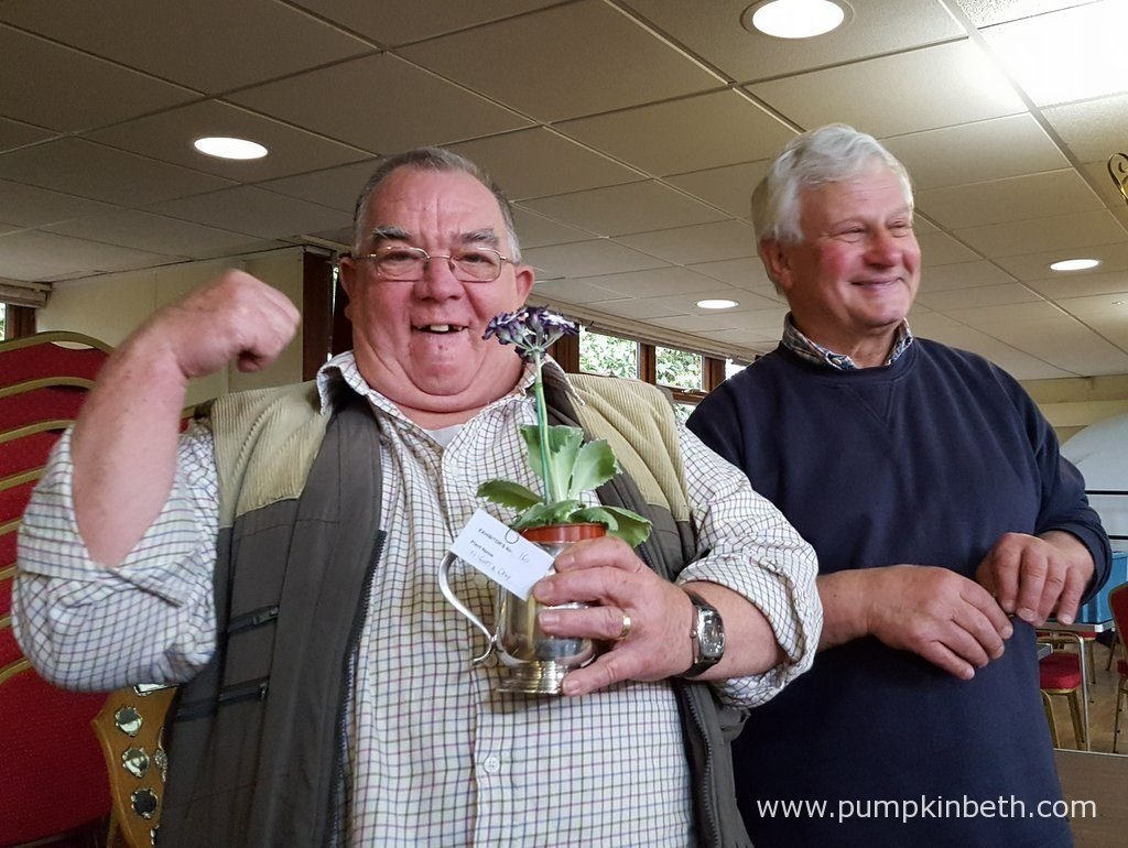 Colin Humphrey celebrates his victory over John Powell in the striped auricular category! The National Auricula and Primula Society Southern Section is a very friendly and welcoming society. Everyone I have met has been kind, helpful and good fun!