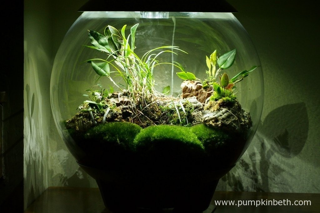 My BiOrbAir terrarium, pictured on the 9th April 2016, after I had re-mounted my orchids onto cork and added two new miniature orchids to this trial and review.