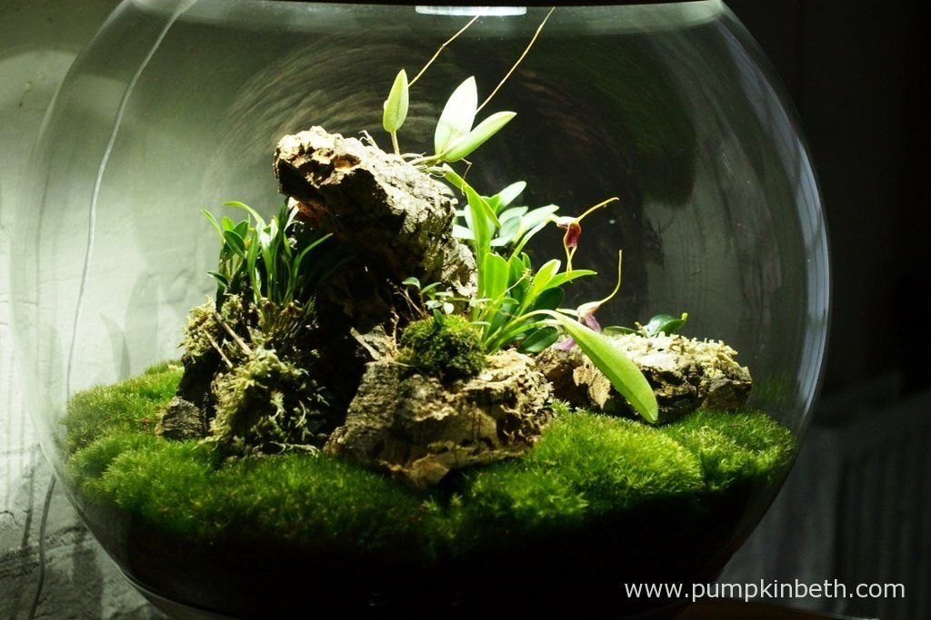 My Miniature Orchid Trial BiOrbAir Terrarium, pictured on the 15th April 2016.