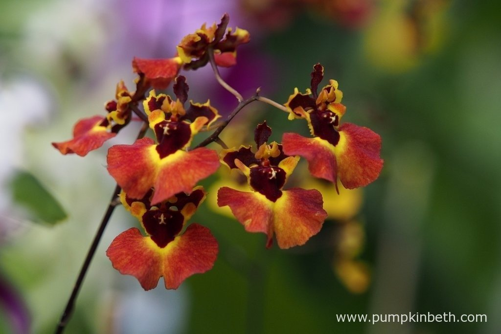 Orchids are such an incredible and diverse range of plants coming in all different shapes, sizes and colours.