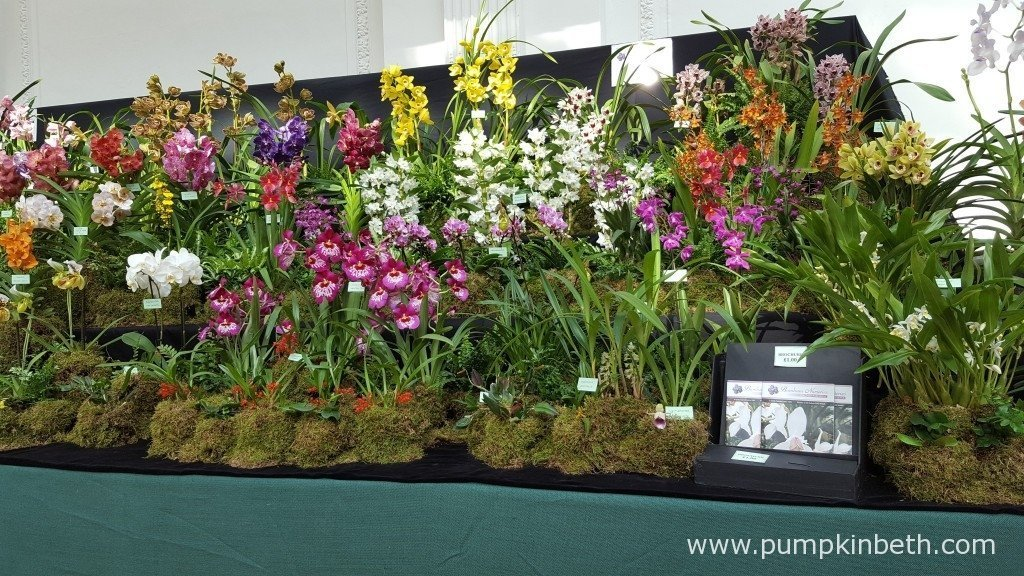 Burnham Nurseries' amazing, Gold Medal winning orchid display at The RHS London Orchid Show 2016.