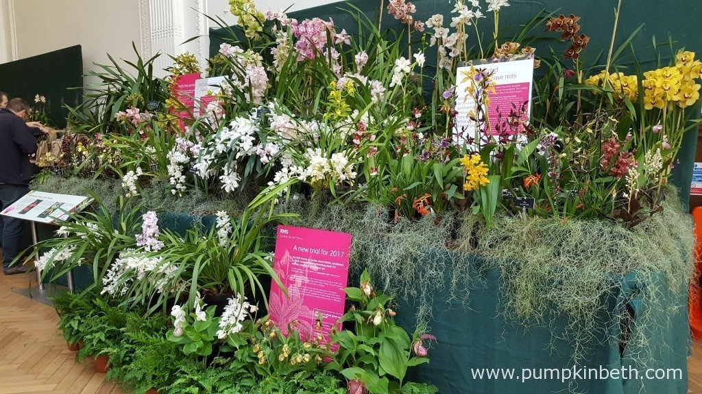 A super display of orchids from the RHS at The RHS London Orchid Show 2016.