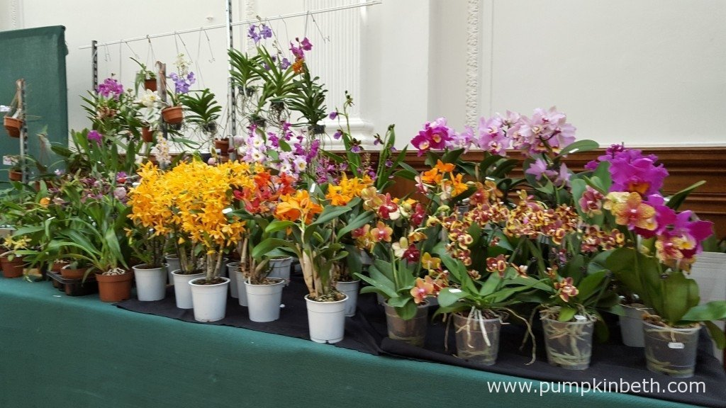 There are so many beautiful orchids both on display, and available for purchase, at The RHS London Orchid Show 2016.
