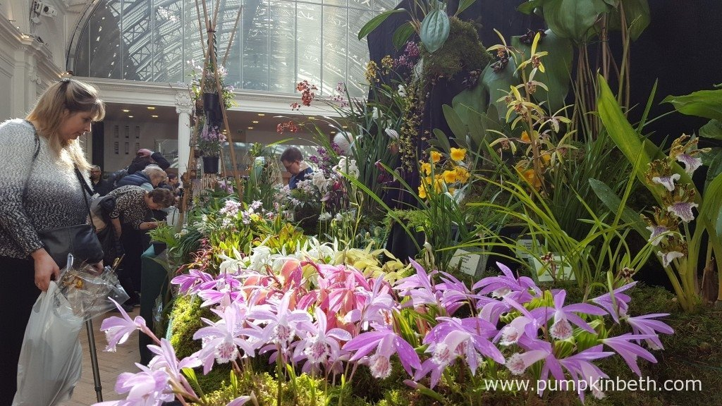 Akerne Orchids' fantastic Gold Medal winning display at The RHS London Orchid Show 2016.