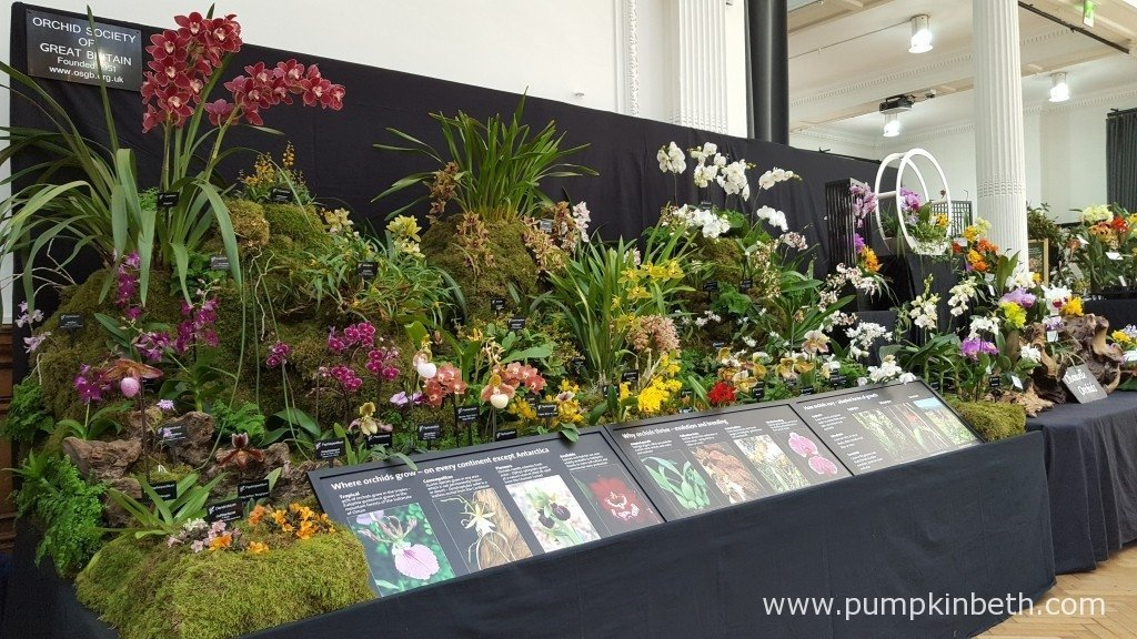 A wonderful display from The Orchid Society of Great Britain at The RHS London Orchid Show 2016. This beautiful orchid exhibit was awarded a Silver-Gilt Medal by the RHS judges.