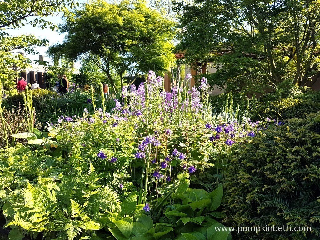 Aquilegia alpina, Geranium 'Johnson's Blue', and Hesperis matronalis provide some of the purple and blue tones in The Morgan Stanley Garden for Great Ormond Street Hospital. This garden was designed by Chris Beardshaw.
