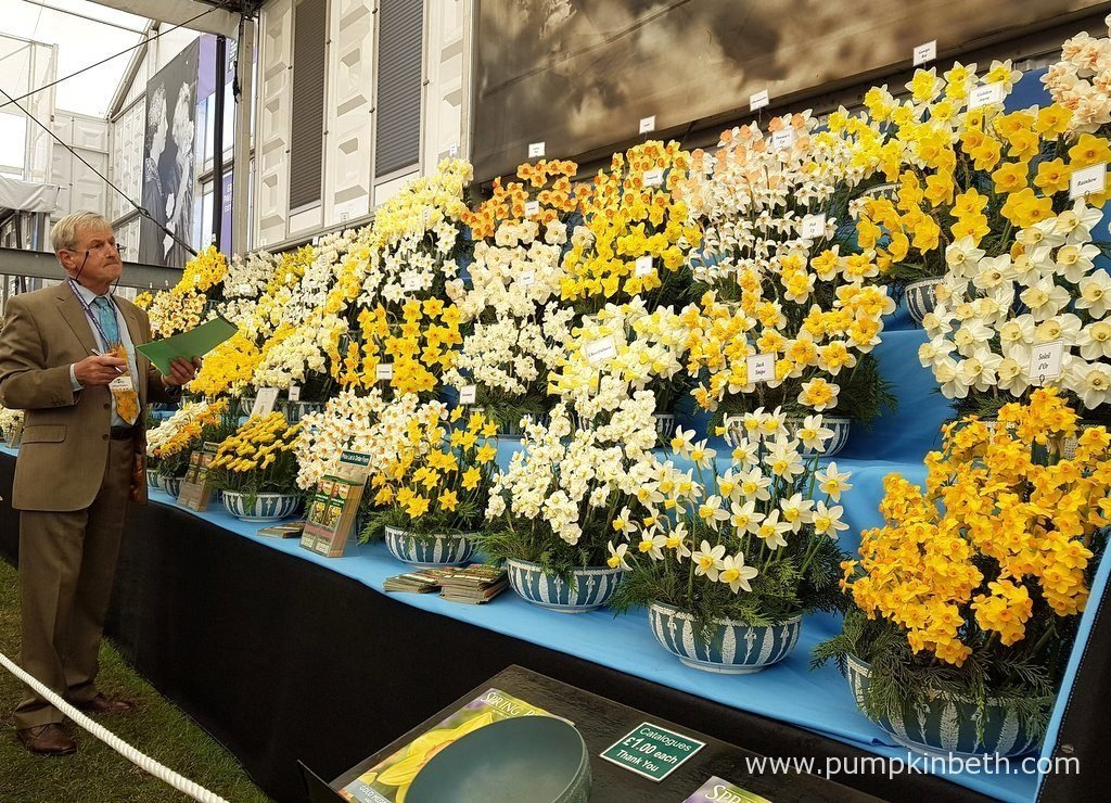 This magnificent display of daffodils was created by Walkers Bulbs at Taylors. The RHS judges awarded Walkers Bulbs at Taylors a Gold Medal for this show stopping exhibit. Pictured in the Great Pavilion at The RHS Chelsea Flower Show 2016.
