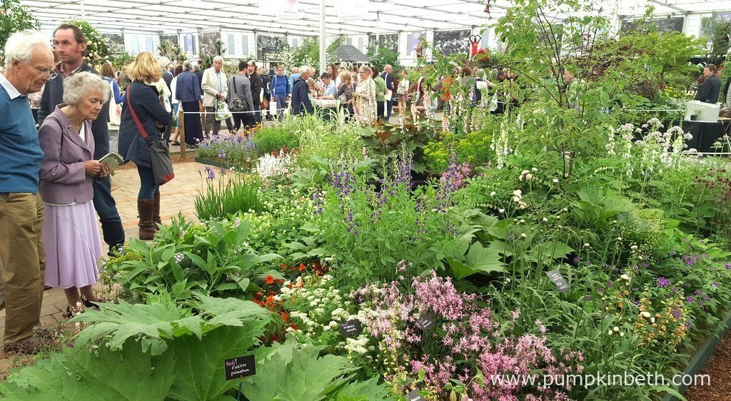 Hardy's Cottage Garden Plants were awarded a Gold Medal for their beautiful exhibit at The RHS Chelsea Flower Show. Hardy Cottage Garden Plants had a large exhibit, which allowed visitors to walk through, and see all of the plants at close quarters, making for an interesting visit.