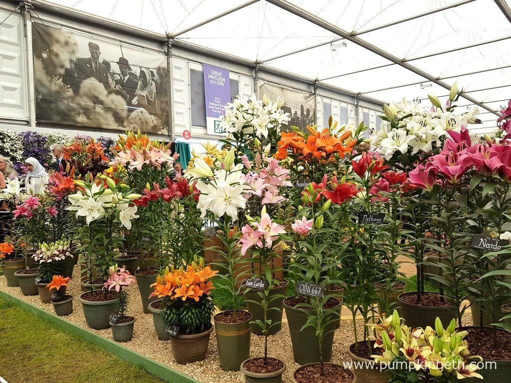 H. W. Hyde & Son's beautiful lily exhibit, was awarded a Gold Medal by the RHS judges in The Great Pavilion, at The RHS Chelsea Flower Show 2016.