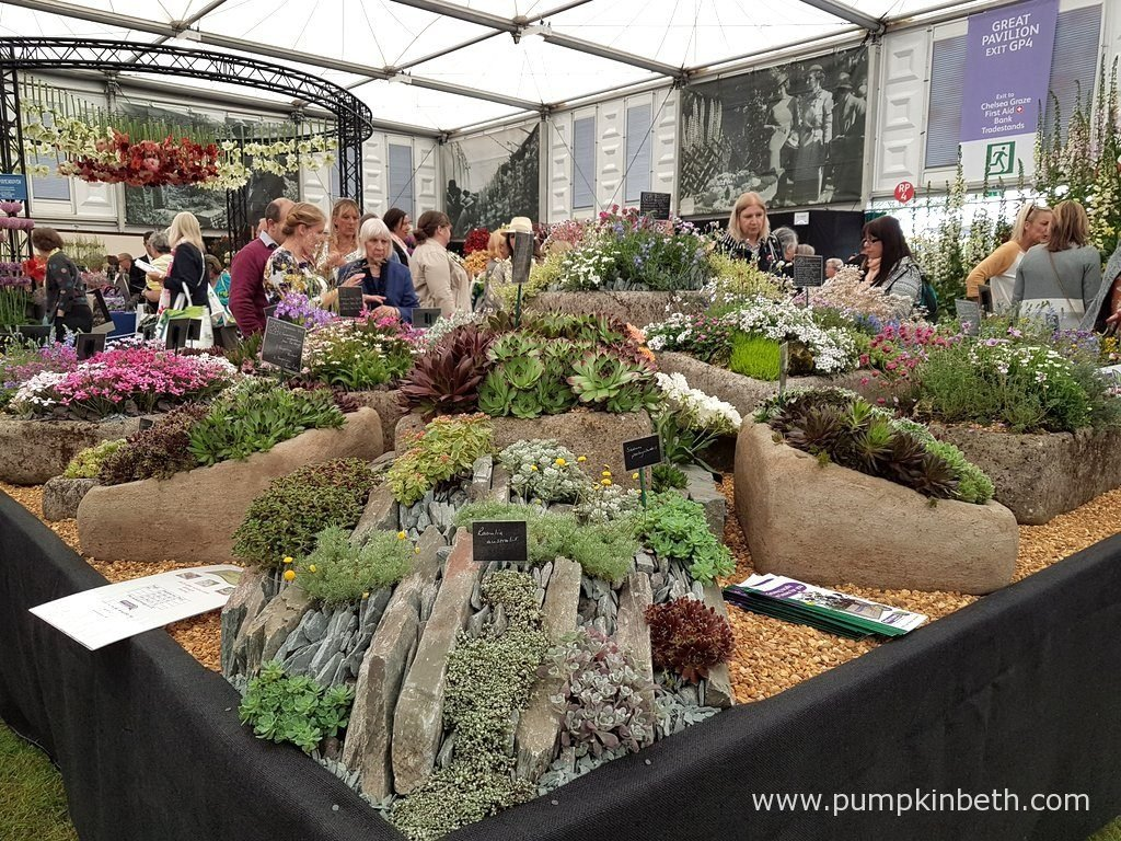 These attractive stone troughs were planted by Rotherview Nursery with Coghurst Camellias. Pictured in The Great Pavilion, at The RHS Chelsea Flower Show 2016.