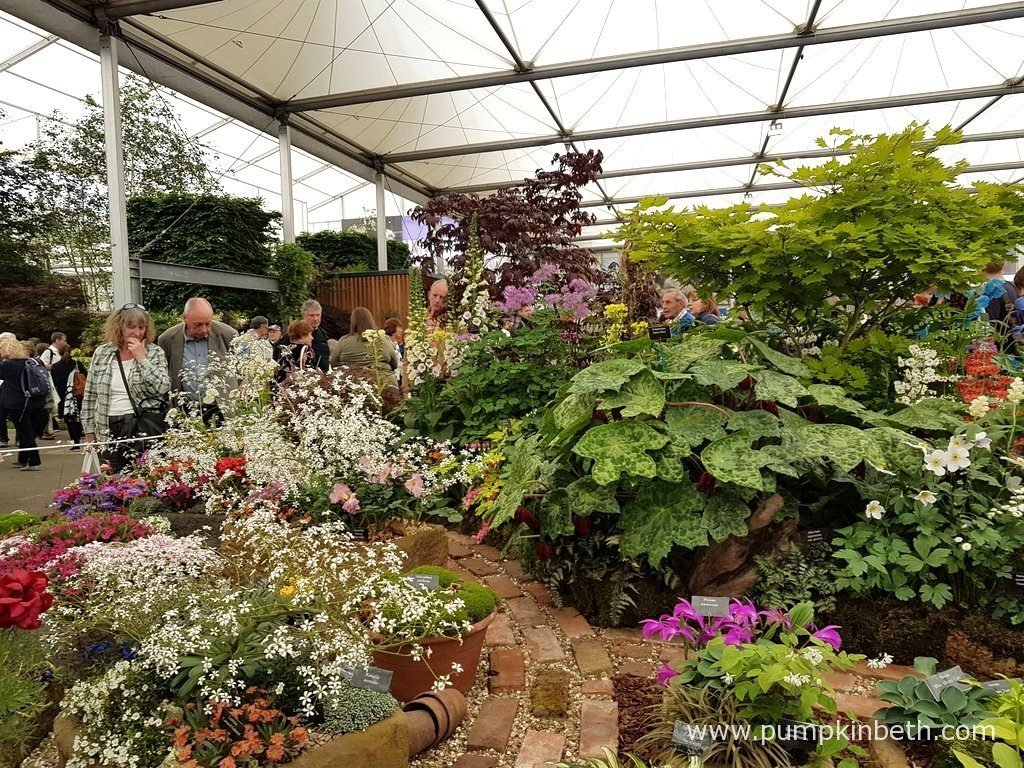 Harperley Hall Farm Nurseries exhibit inside The Great Pavilion,at The RHS Chelsea Flower Show 2016.