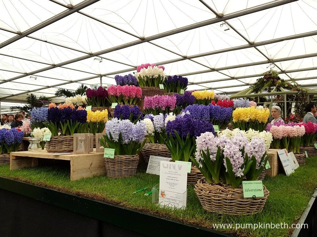 The fragrance from these beautifully grown Hyacinths, on the J. S. Pennings de Bilt exhibit, was a real and special highlight of my visit to The RHS Chelsea Flower Show 2016.