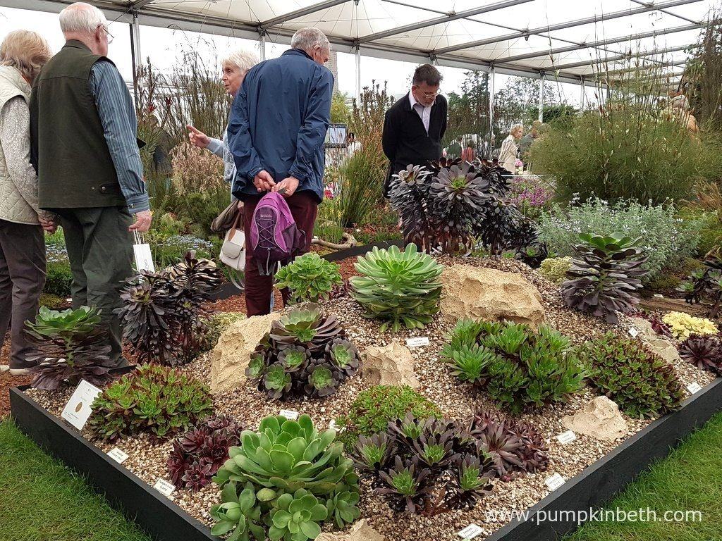 This is Cornish nursery, Penberth Plants' super exhibit in The Great Pavilion, at The RHS Chelsea Flower Show 2016.