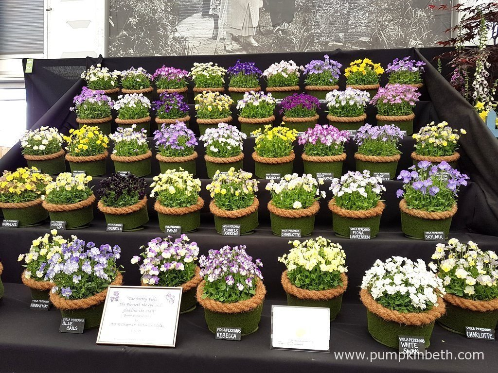 Victorian Violas were awarded a Gold Medal by the RHS judges for their pretty Viola exhibit, at The RHS Chelsea Flower Show 2016.