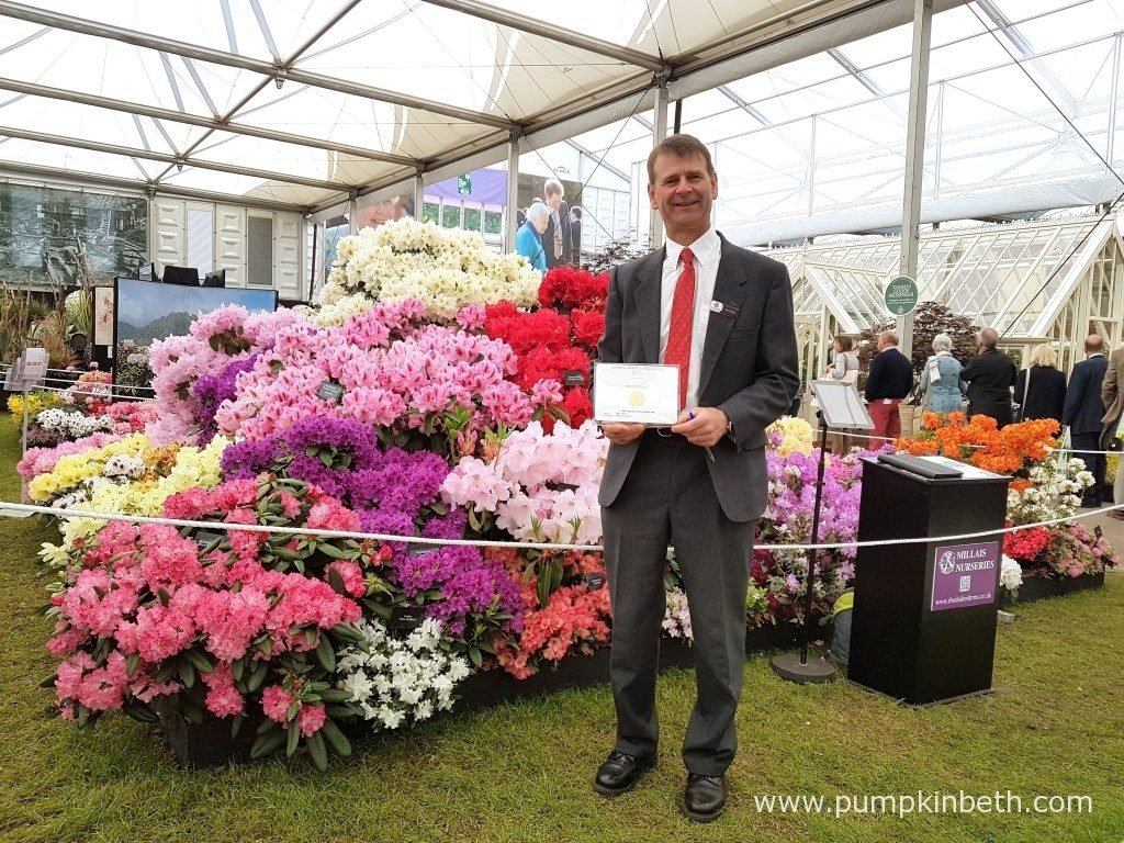 David Millais, Chairman of the RHS Rhododendron, Camellia and Magnolia Group, pictured in front of Millais Nurseries' Gold Medal winning exhibit, at the RHS Chelsea Flower Show 2016.