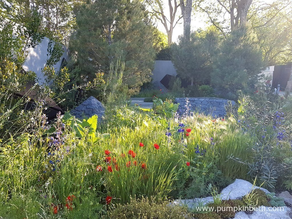 The Royal Bank of Canada Garden was designed by Hugo Bugg and built by Landscape Associates & Himalayan Landscaping. The RHS judges awarded The Royal Bank of Canada Garden a Silver-Gilt Medal, at The RHS Chelsea Flower Show 2016. The Jerusalem pines, Pinus halepensis provided a great backdrop to the garden.