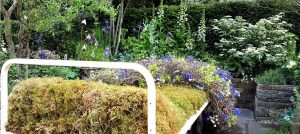 The Garden Bed by Stephen Welch and Alison Doxey