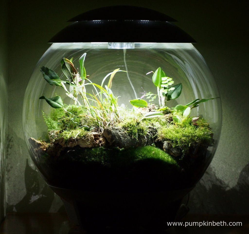 My BiOrbAir terrarium, as pictured on the 11th June 2016.
