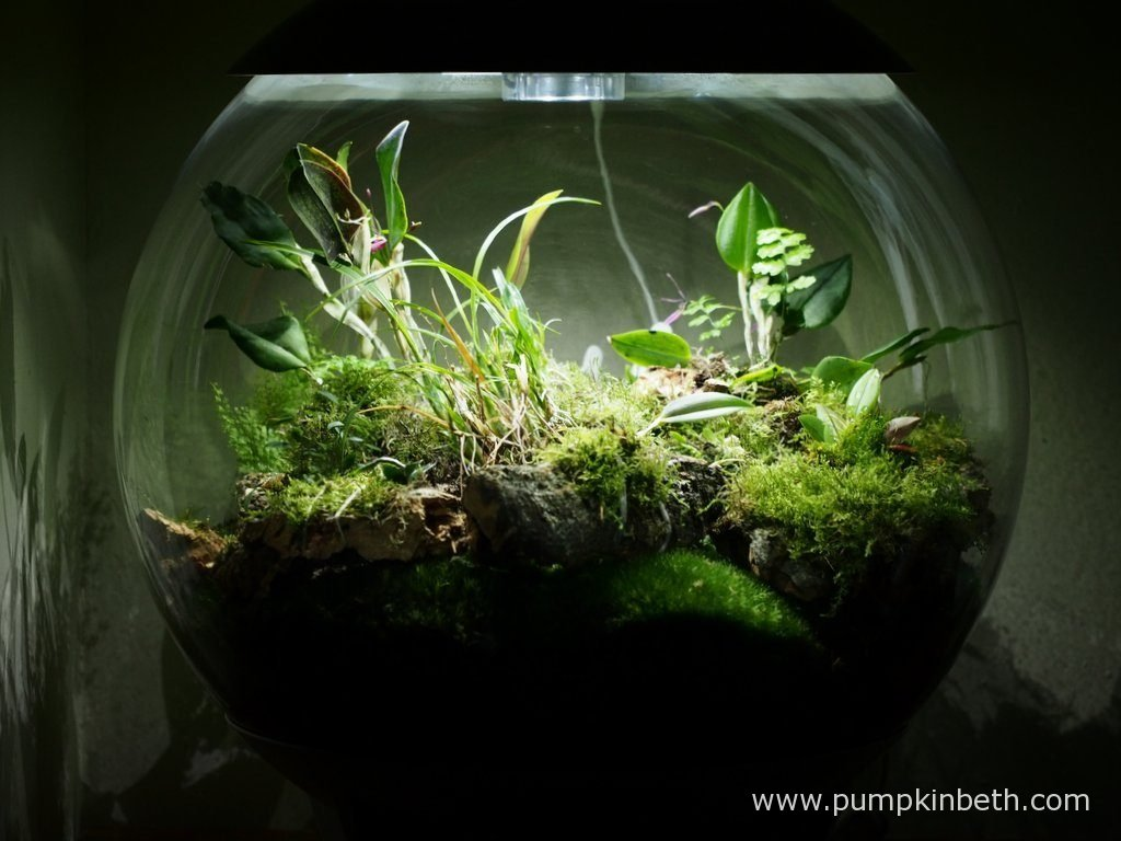 My BiOrbAir terrarium, as pictured on the 11th June 2016. This terrarium has a variety of different ferns, orchids and mosses growing inside.