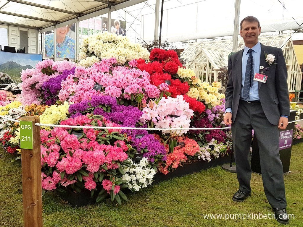 David Millais, Chairman of the RHS Rhododendron, Camellia and Magnolia Group, in front of Millais Nurseries' Gold Medal winning exhibit at the RHS Chelsea Flower Show 2016.