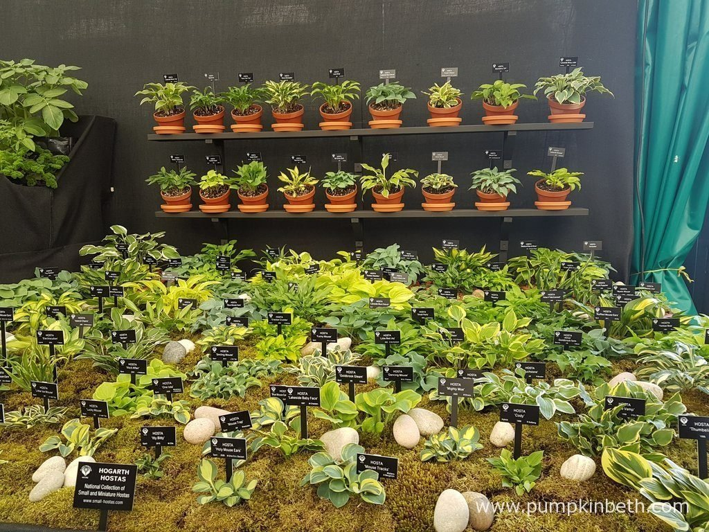 Hogarth Hostas exhibit of small and miniature Hostas was awarded a Silver-Gilt Medal by the RHS judges, at the RHS Chelsea Flower Show 2016.