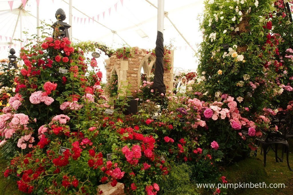 Peter Beales Roses beautiful exhibit inside The Festival of Roses Marquee, was chosen by the RHS judges as the Best Rose Exhibit, at the RHS Hampton Court Palace Flower Show 2016.