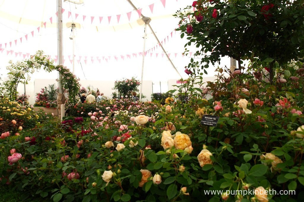 The scent inside The Festival Of Roses Marquee is divine, it's filled with the sweetest, most delicious, tea rose fragrance which surrounds each visitor to this very special marquee.