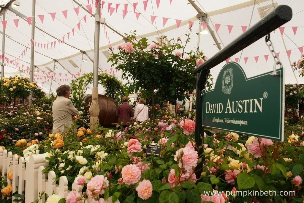 David Austin Roses were awarded a Gold Medal by the RHS judges for their lovely Rose Garden exhibit, inside The Festival of Roses Marquee, at the RHS Hampton Court Palace Flower Show 2016.